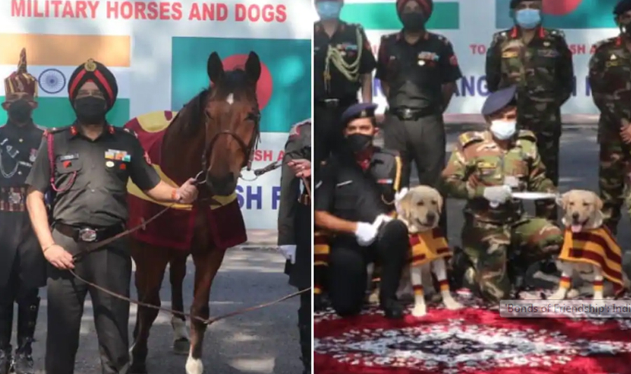 India gifts 20 horses, 10 mine detection dogs to Bangladesh
