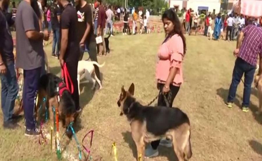 J-K: Sher-E-Kashmir University organises dog show